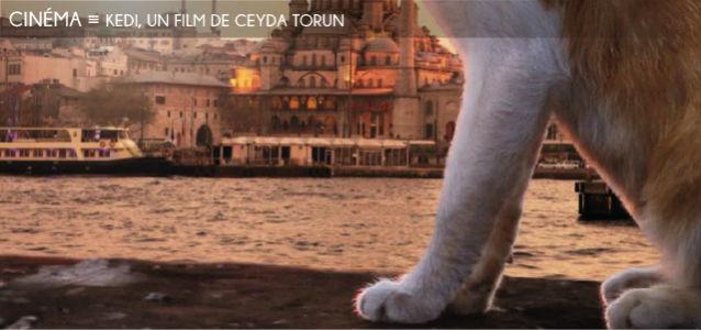 kedi, ceyda torun, chats, istanbul, tour de galata, bosphore, turquie